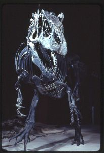20110520083135allosaurus-smithsonian-skeleton.jpg