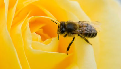 Bees May Understand Zero, a Concept That Took Humans Millennia to Grasp