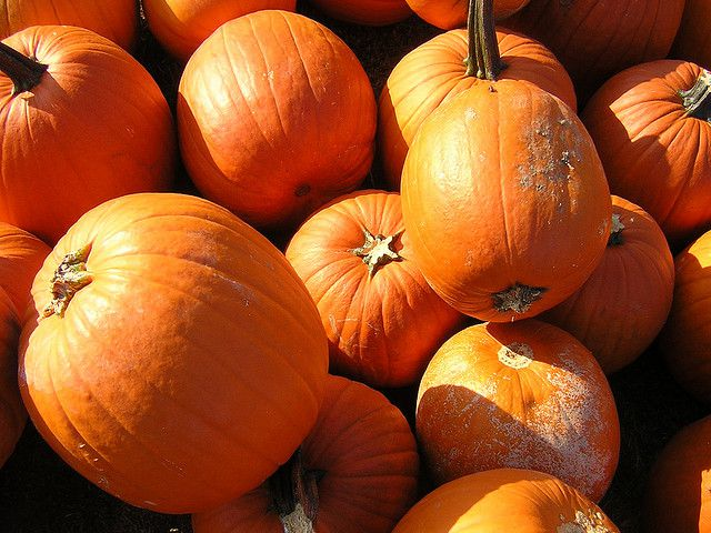 who steals pumpkins from kindergarteners smart news smithsonian