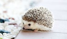 The UK's Hedgehogs (and Other Mammals) Are In Danger