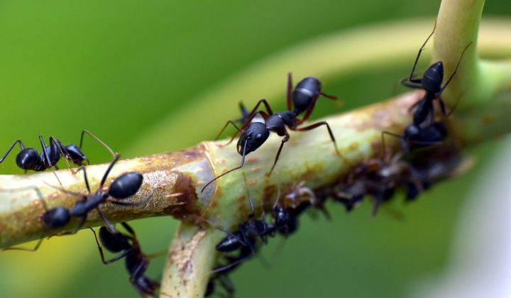 How Social Insects Control the Spread of Disease