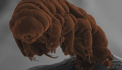 Why Are Tardigrades the World's Hardiest Creature? DNA Offers Clues