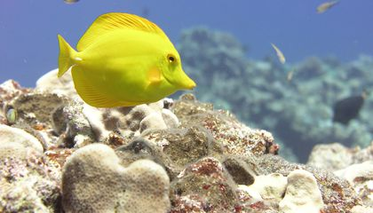 Three New Marine Monuments in the Pacific
