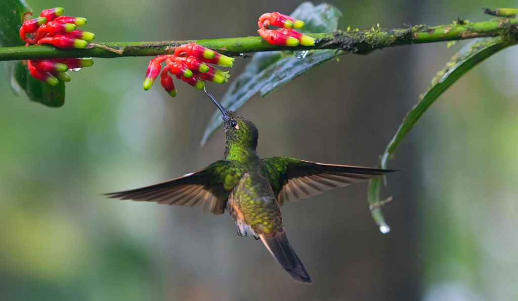 Hummingbirds are key pollinators. They'll occasionally fly up to 500 miles nonstop when migrating to warmer climates.
