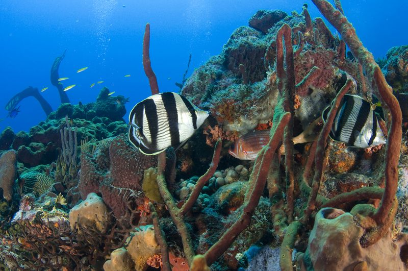 "Diving Tent Reef. <a href=""https://www.flickr.com/photos/theactionitems/5257589361/>Mark Yokoyama</a>"