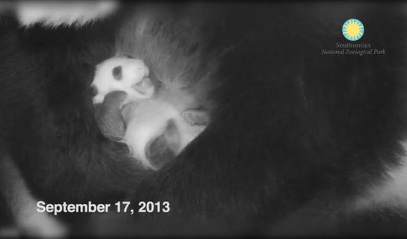 Preview thumbnail for video'Help Us Name Our Giant Panda Cub at the Smithsonian's National Zoo