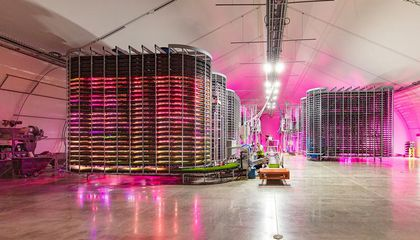Could Indoor Vertical Farms Feed Livestock?