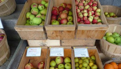 The Fight to Save Thousands of Heirloom Apple Trees