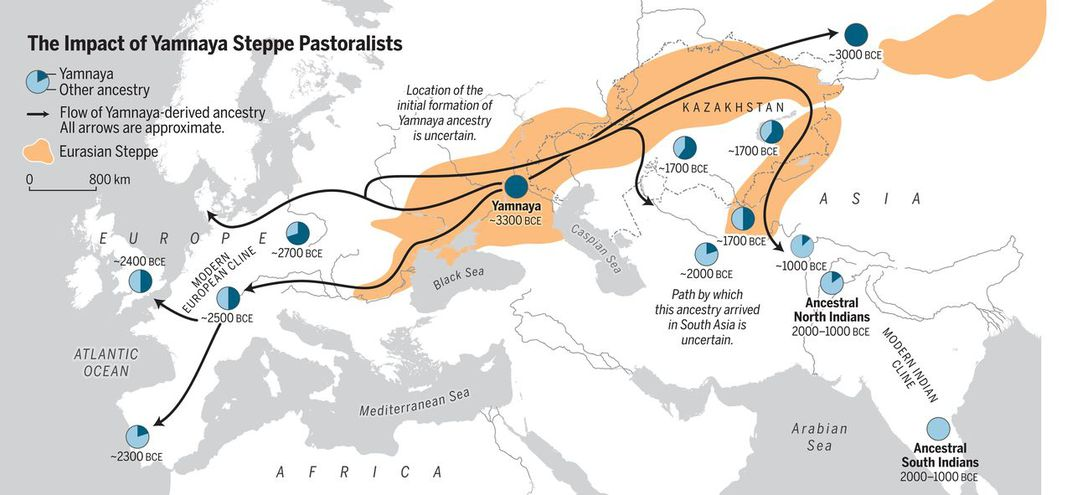 A white and gray map of Europe and Asia with orange highlighting where the Eurasian Steppe population migrated.