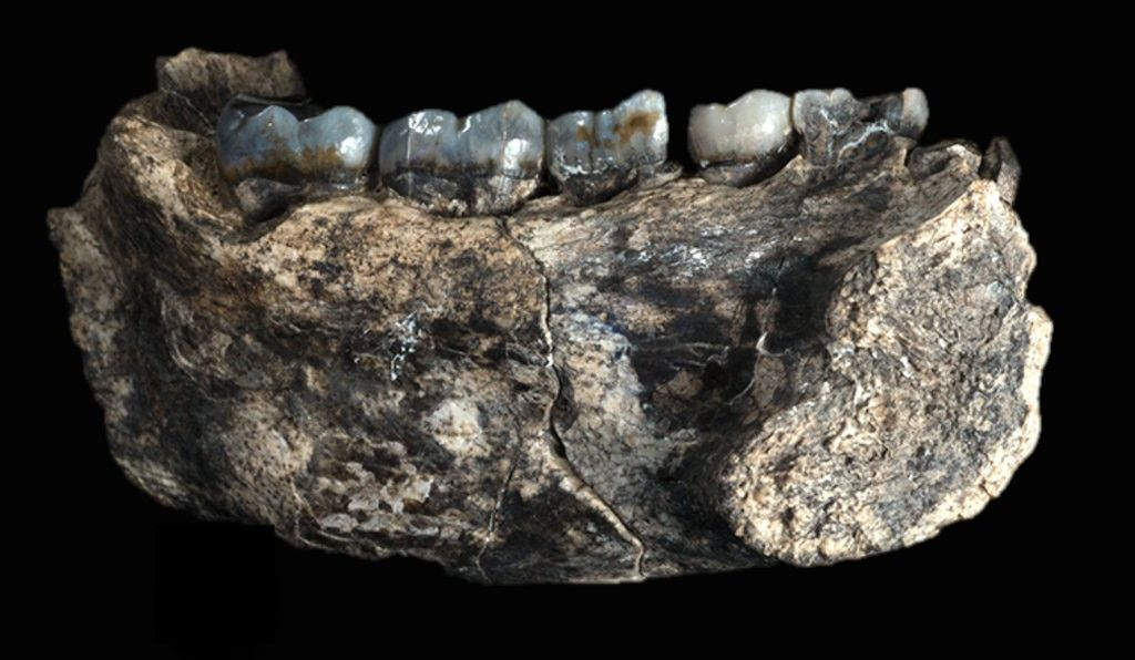 In Afar, Ethiopia, a rare fossil jawbone belonging to our genus, <em>Homo</em> was discovered by our research team in 2013. To solve the mystery of when this human ancestor lived on Earth, we looked to volcanic ash layers for the answers.