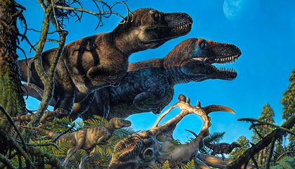 Dinosaurs Nested in the High Arctic