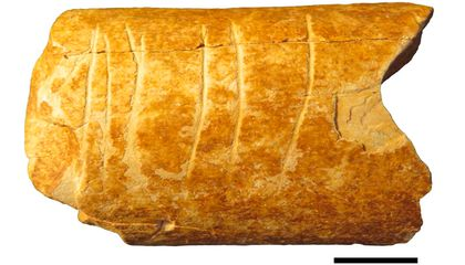 120,000-Year-Old Cattle Bone Carvings May Be World's Oldest Surviving Symbols