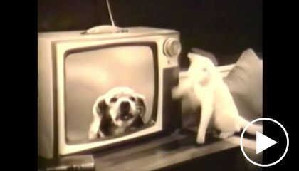 VIDEO: The CIA Trained These Animals to Spy for Them