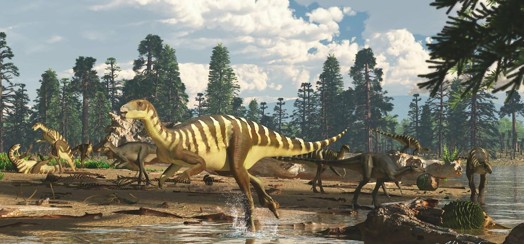 Caption: New Dinosaur in Australia Reveals a 'Lost World'