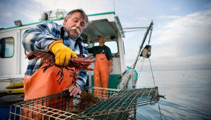 America's in the Midst of a Lobster Boom