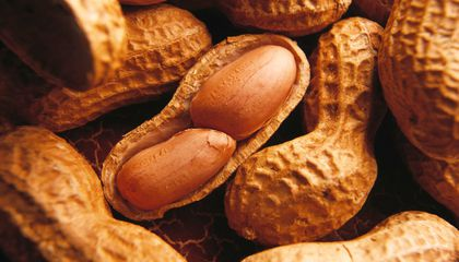 Genes of Ancestral Peanuts May Help Feed the World