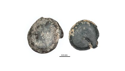 3,000-Year-Old Quinoa Found in Ontario