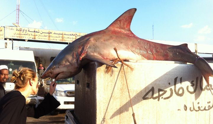 Articles tagged as Sharks | Smithsonian