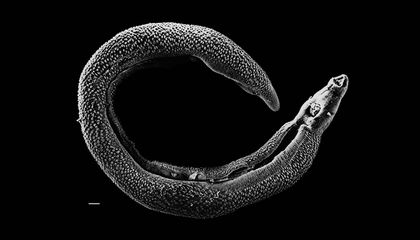 How Parasites Became So Popular