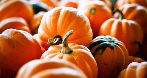 How will you be working with pumpkins in your kitchen this fall?