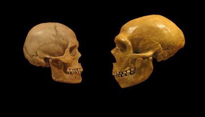 Why Humans Don't Have More Neanderthal DNA