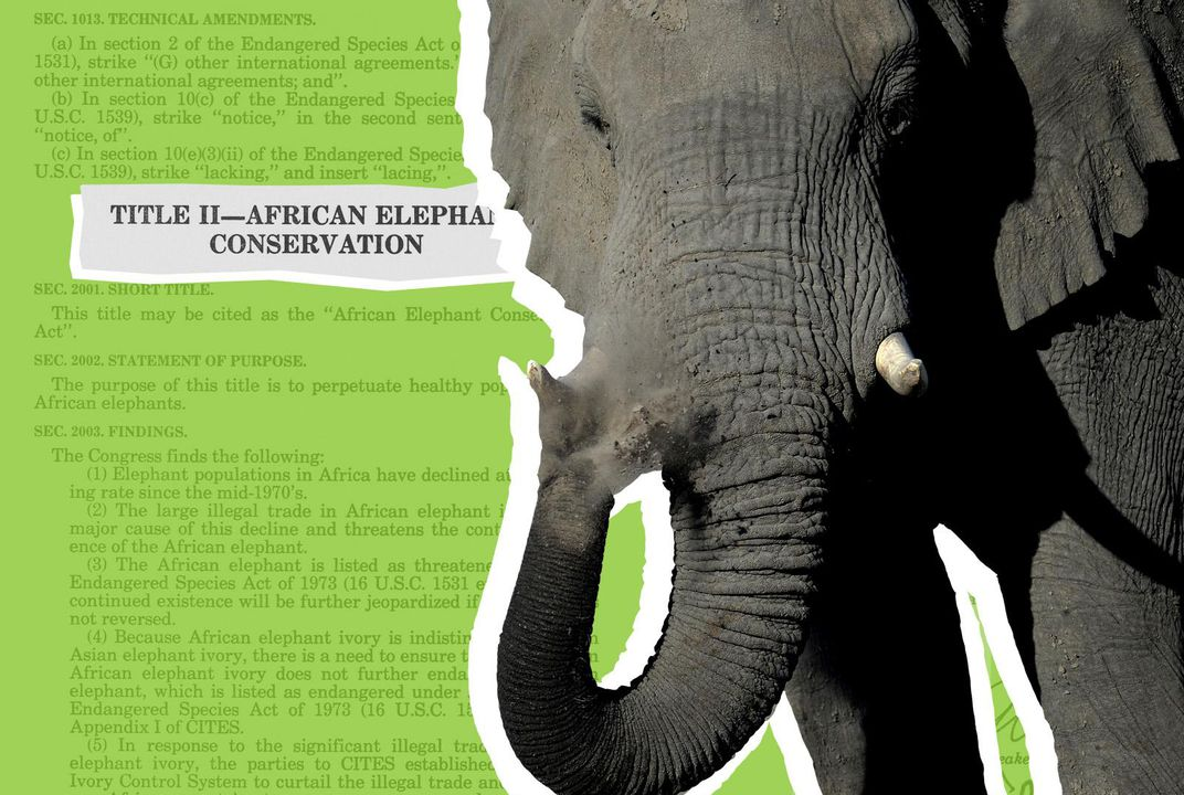 What Elephants Teach Us About Consumption and Extinction