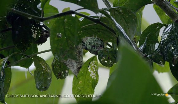 Preview thumbnail for video'Why Hummingbirds Don't Like Flying in Rainy Conditions