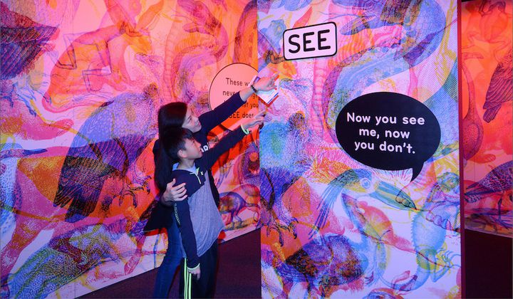 See the World Through the Eyes of a Butterfly at a New Exhibit on the Senses