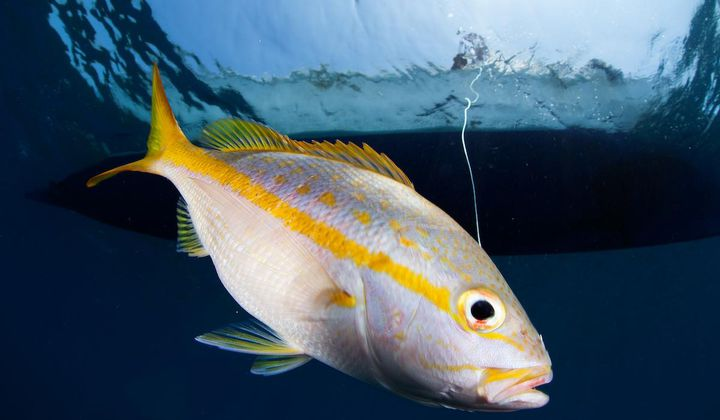 Physique Pinpoints the Origins of Fish