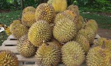 Durians Smell Awful — But the Taste Is Heavenly