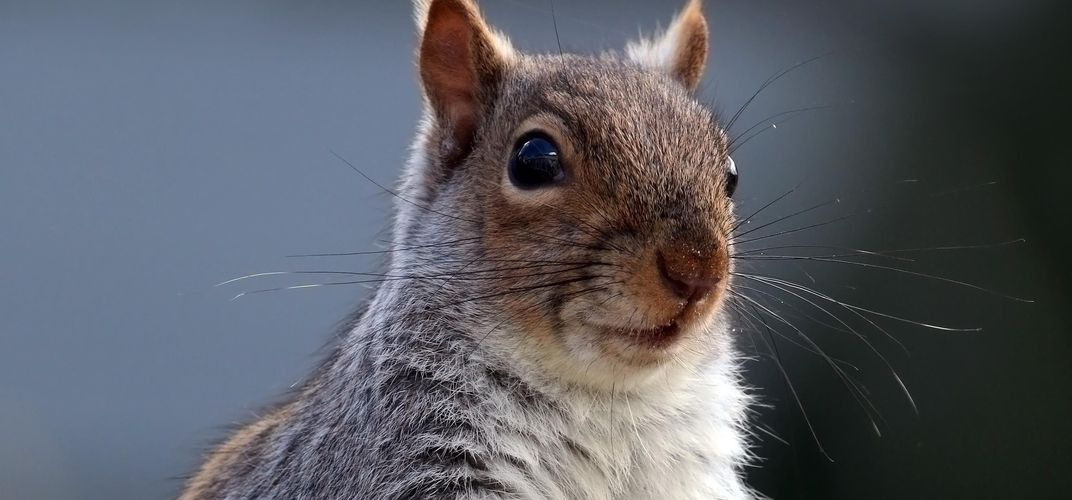 Caption: New Census Counted All Central Park's Squirrels