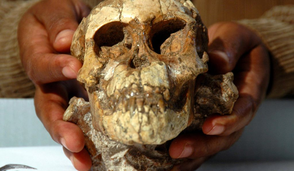 This skull of an <em>Australopithecus afarensis</em> child found in Ethiopia dates back to about 3.3 million years ago.