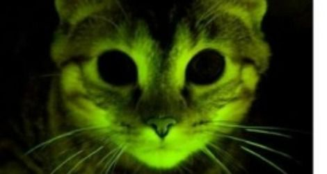 A glowing kitty may help in the fight against AIDS