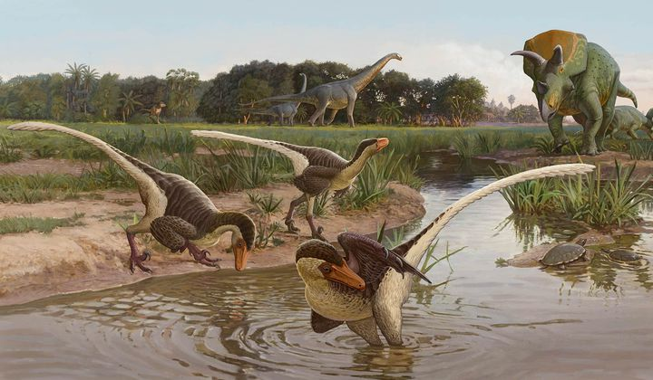 New Feathered Dinosaur Found in New Mexico