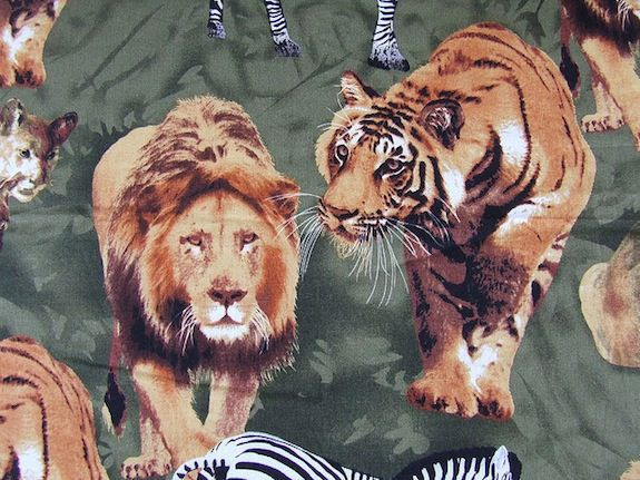 Tiger vs  Lion—Who Would Win? | Smart News | Smithsonian