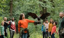 Six Spots Where You Can Try Your Hand at Falconry