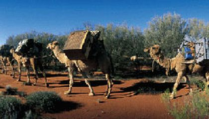 It's Camelot in the Desert