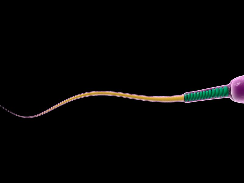 sperm illustration