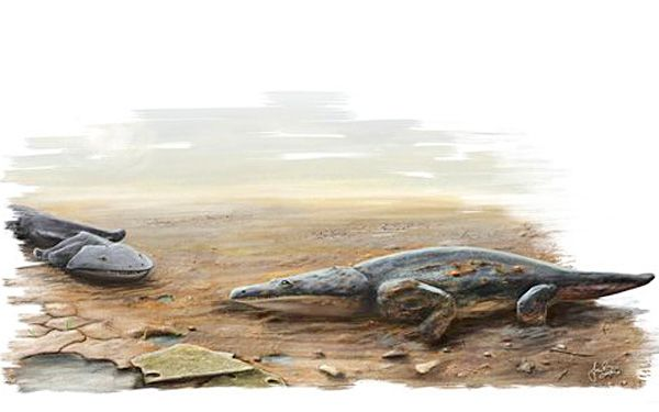 Ancient salamander was as long as a car!