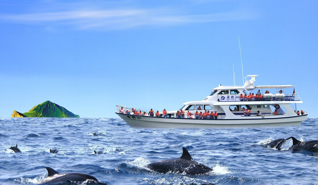 A pod of dolphins passes a Turtle Island tour boat.