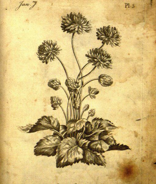 257-Year-Old Coloring Book Rediscovered in St. Louis | Smart News ...