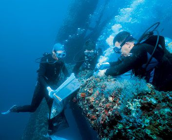 Medicine from the Sea | Science | Smithsonian Magazine