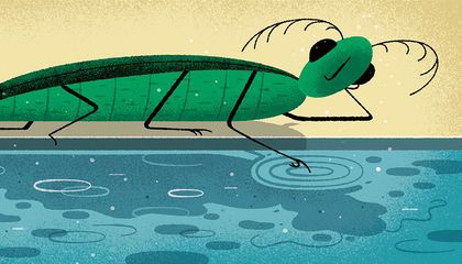 Do Insects Have Consciousness?