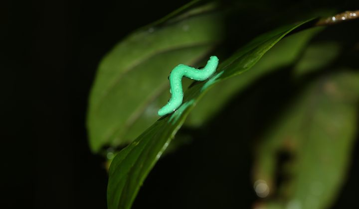 How Clay Caterpillars Are Helping Science