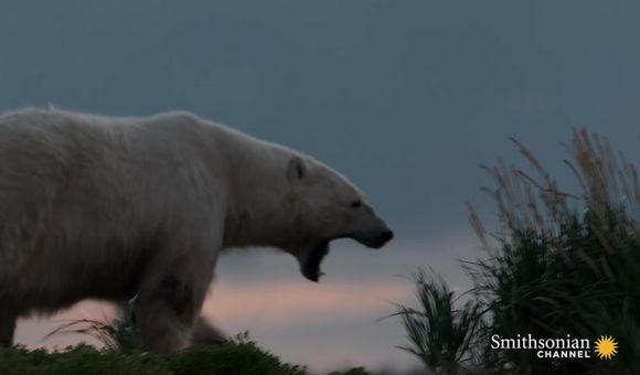 Preview thumbnail for video'A Tense Encounter Becomes a Perfect Polar Bear Photo Op