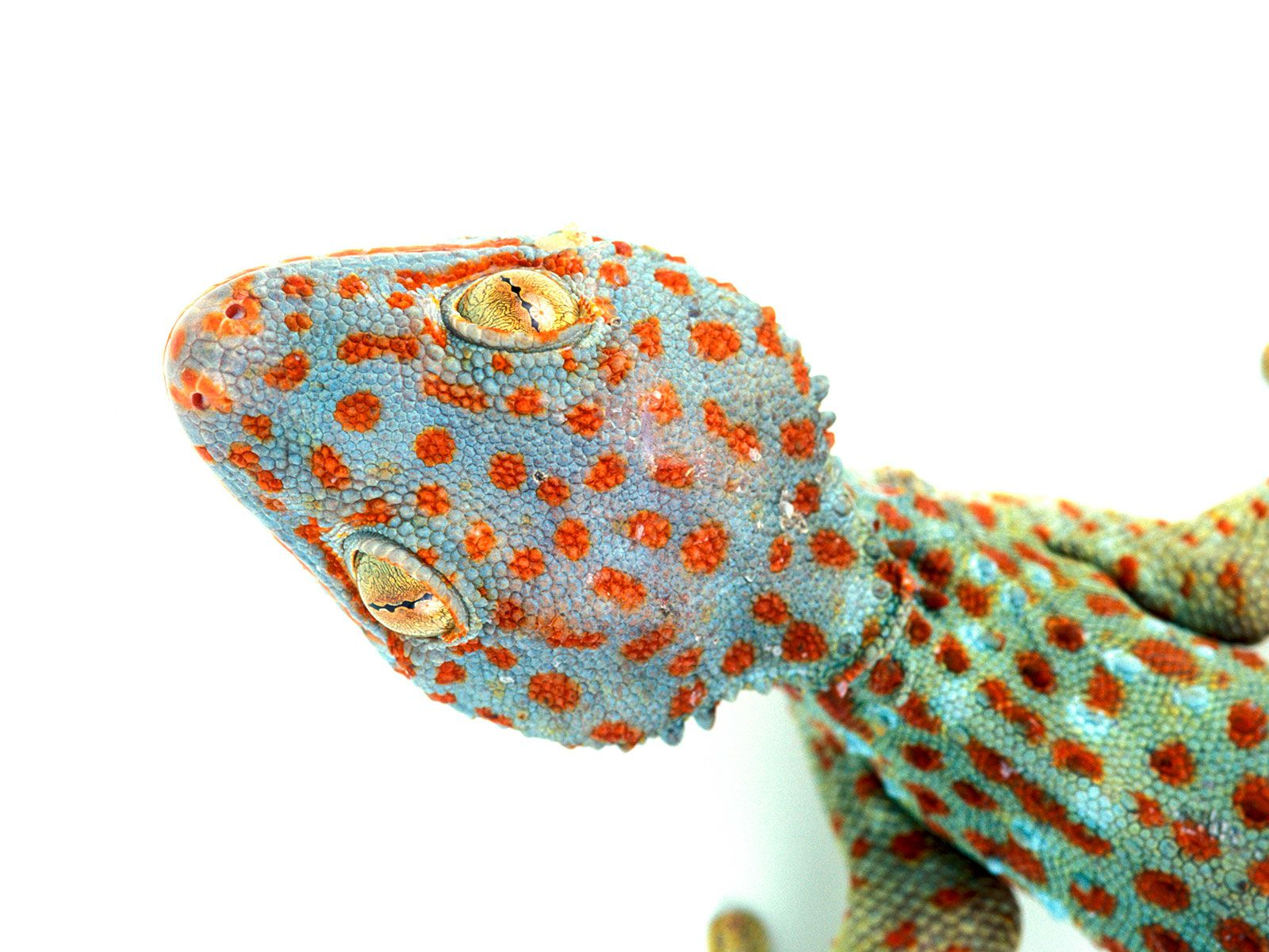 A Quarter of All Reptile Species, Many of Them Endangered, Are Sold Online