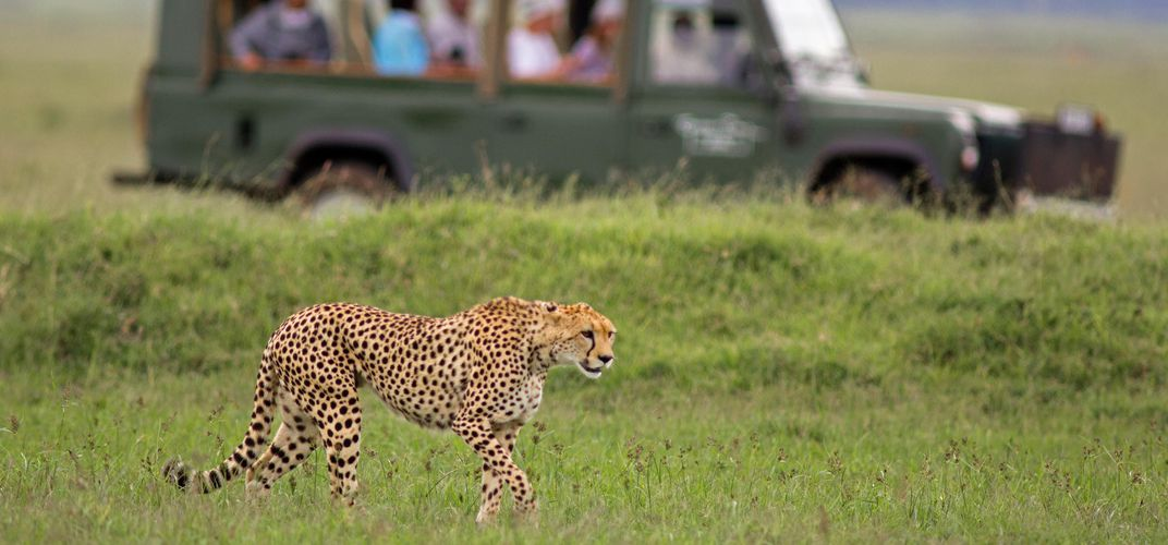 The thrill of being on safari