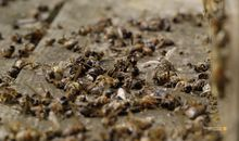 The First Job Bees Have in Spring Is Grim