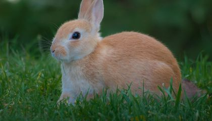 California's Bunny Museum Hops to a New Home