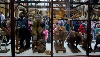 How Museum Collections Could Help Scientists Predict Future Pandemics